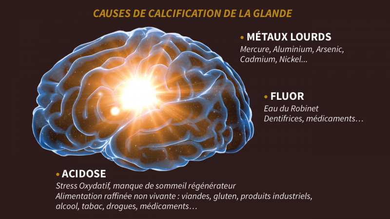 les cause de calcification de la glande pinéale